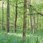 SIUE now has protected nature preserve