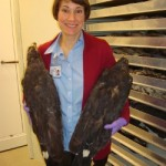 Biology graduate student discovers solitary eagle nest
