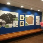 URCA student researches, creates campus display for largest elm tree in Illinois